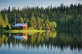 Finlandiya sakitliyi milli brendə çevirməyə hazırlaşır